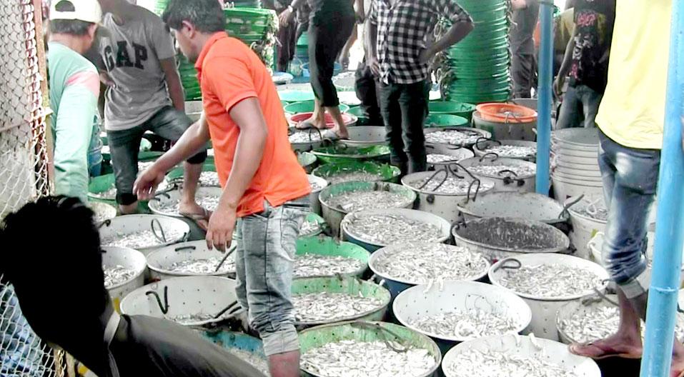 আপদকালীন সময় বিবেচনা করে রাঙ্গামাটি থেকে মাছ আহরণ ও পরিবহন বন্ধ করা জরুরী