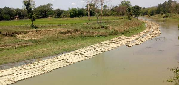 দেড় মাসেও মিলেনি বন বিভাগের ছাড়পত্র দীঘিনালায় মাইনী নদীতে নষ্ট হচ্ছে বাশঁ